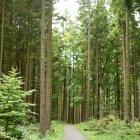 Pădurea 01