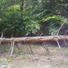 Pădurea 02