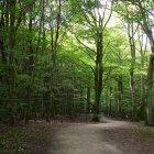 Pădurea 03