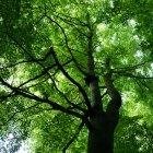 Pădurea 04