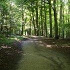 Pădurea 05