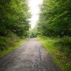 Pădurea 08
