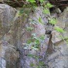 Mure verticale