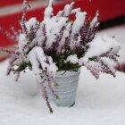 Iarna în Amsterdam 05