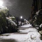 Iarna în Amsterdam 29