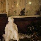 Iarna în Amsterdam 28
