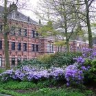 Rhododendron în Westerpark