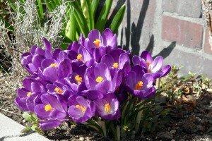 Să vină primăvara, și să ne pară bine!