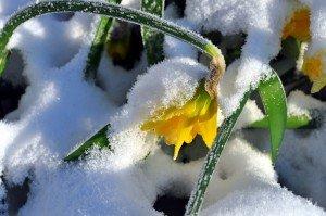 A nins și în Olanda