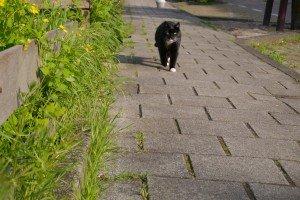 Pisică ieșită la plimbare, fugărind fotograful