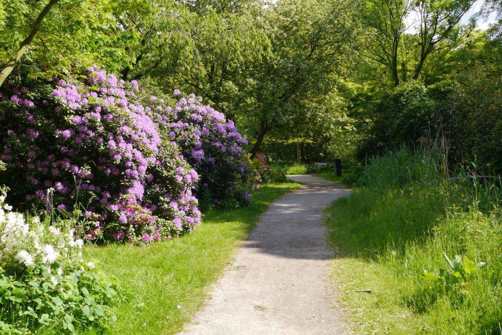 Aleea cu rododendroni