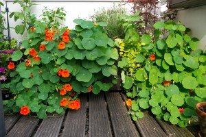 Grădina reloaded