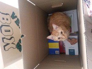Pisoi la cutie