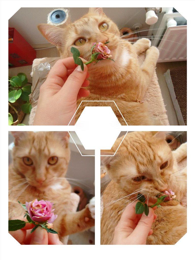 Eric si trandafirul