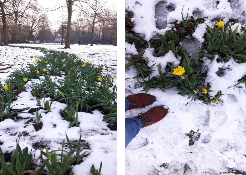 Zăpadă și narcise