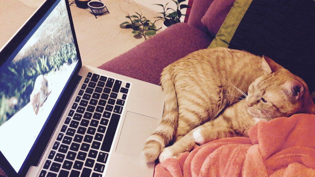 Eric vizionează filme pentru pisici