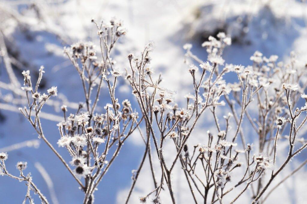 Flori înghețate