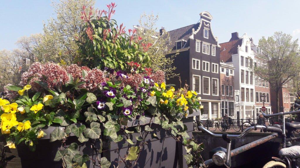 Flori, fațade, biciclete