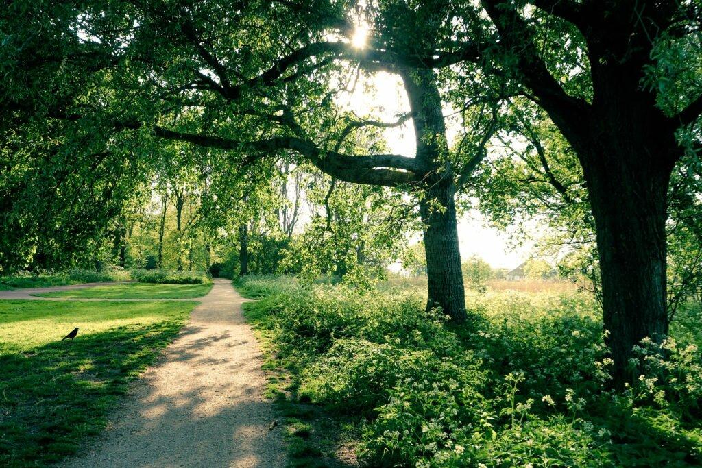 Plimbare in natura