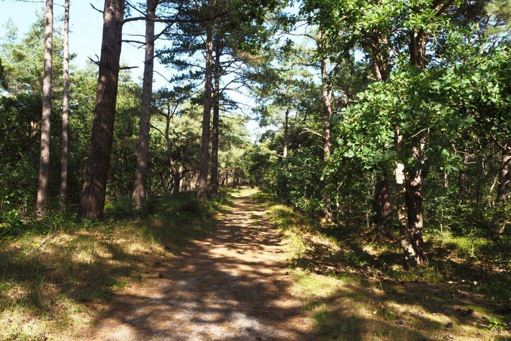 Pădurea la Schoorl