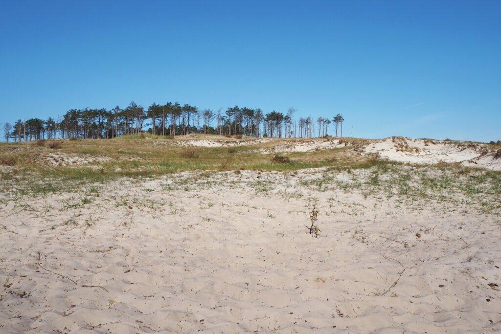 Dune la Schoorl