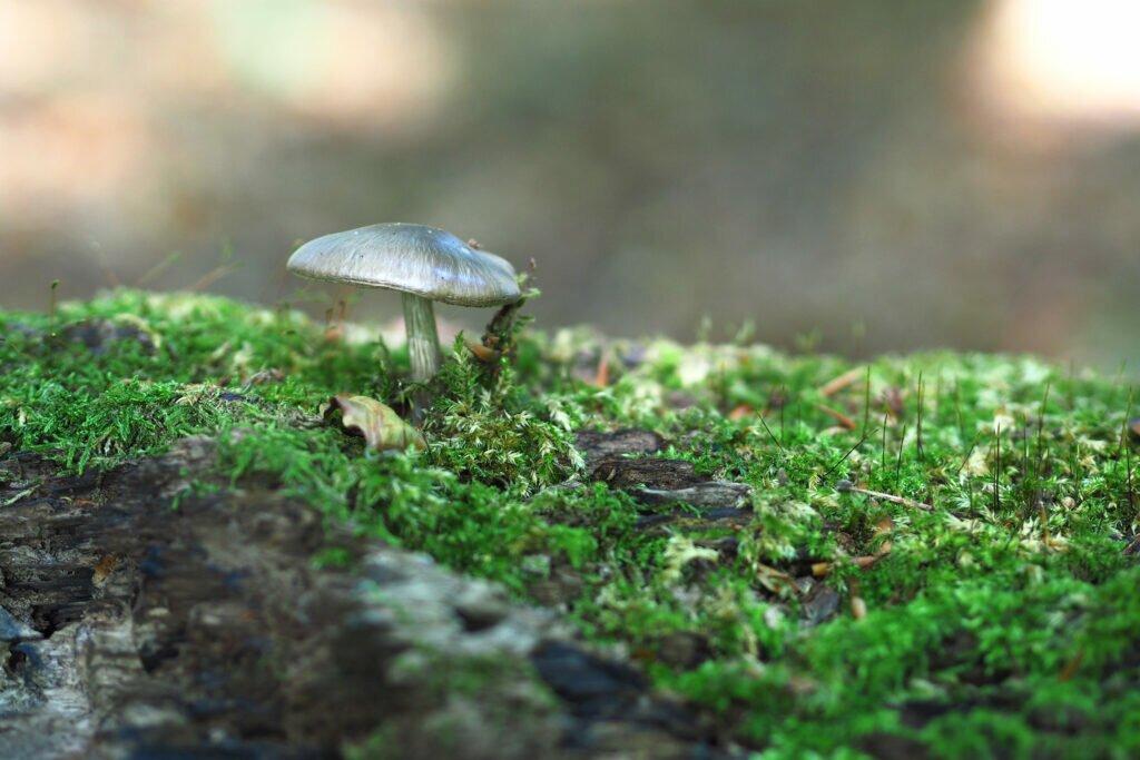 Ciuperci 01