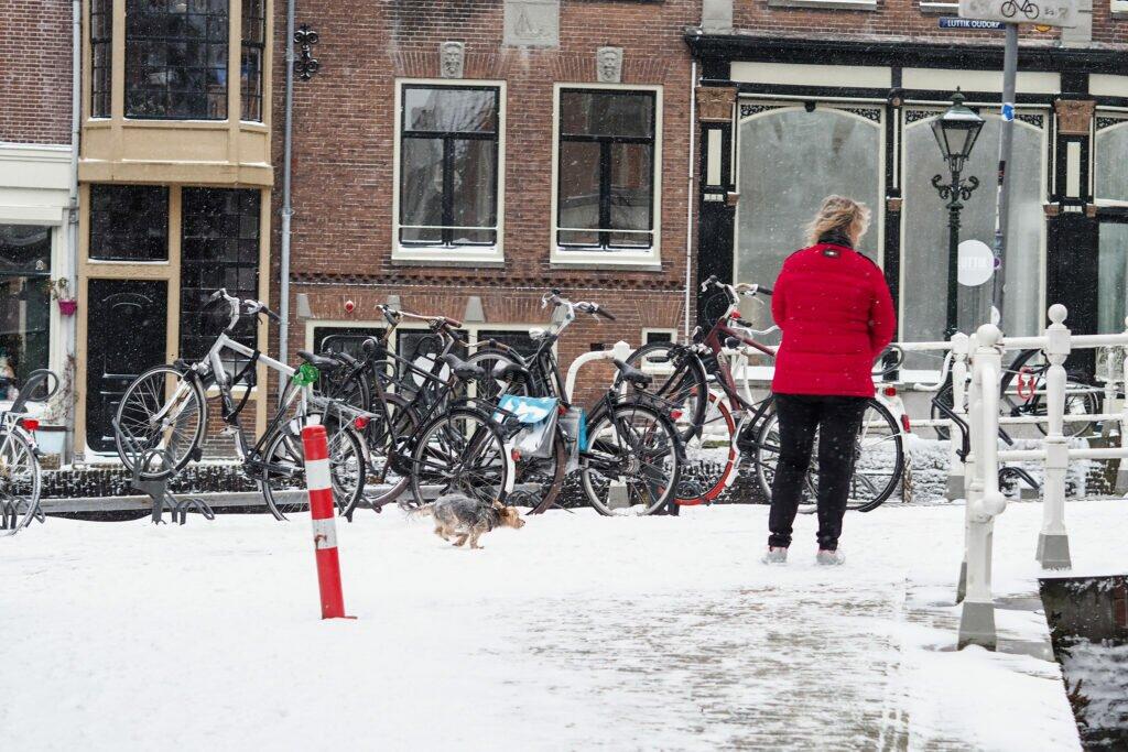 Iarna in Alkmaar 02