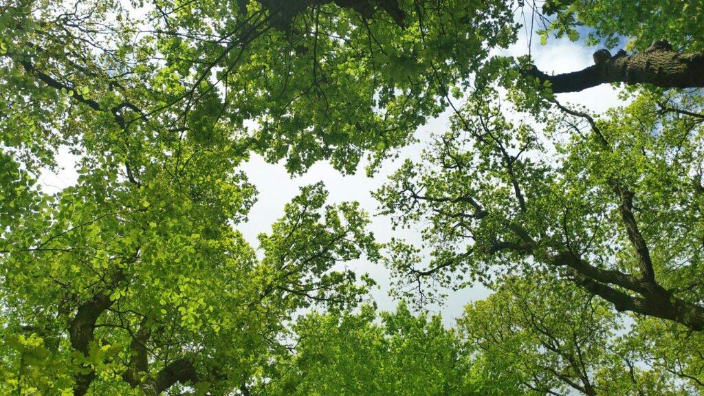 Priveste cerul