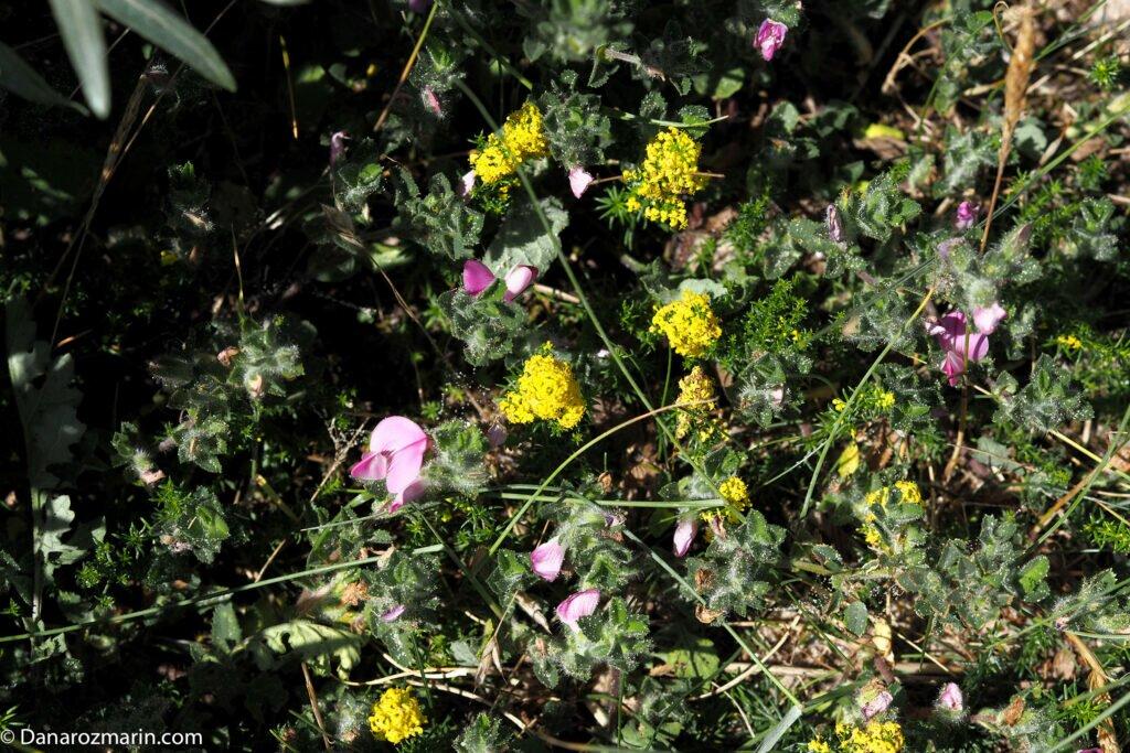 Flori de dune 02