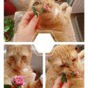Duminică, nuferi, treburi pisicești