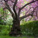 Spiritul primăverilor trecute
