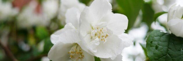 Bucurii de primăvară: sindromul oboselii postvirale